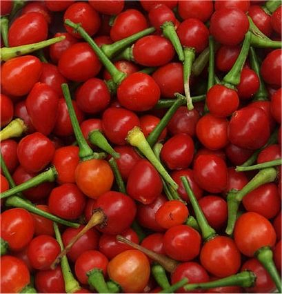Wiri Wiri Pepper Pods