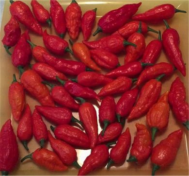 Fresh Bhut Jolokia Pepper Pods Online - Free Shipping
